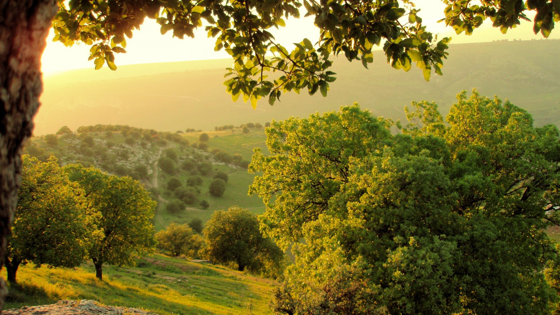 Ajloun Forest, Things to do in Jordan